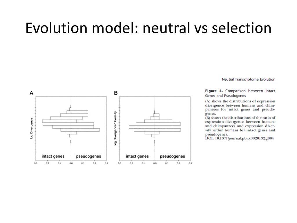 Evolution model: neutral