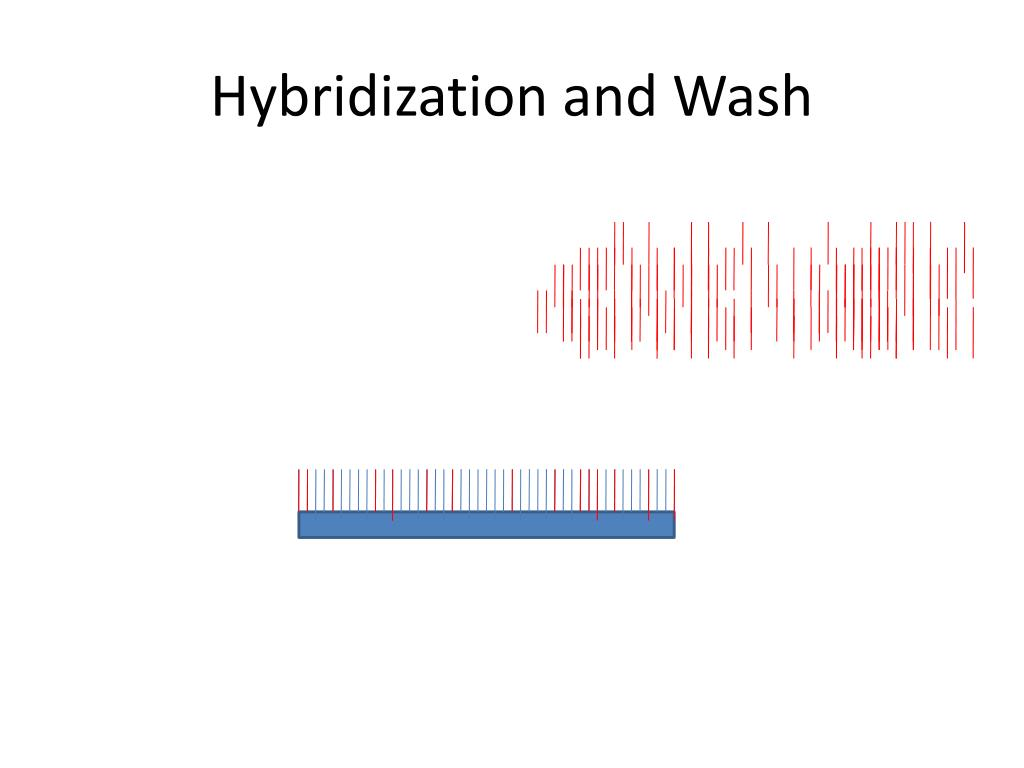 Hybridization and Wash
