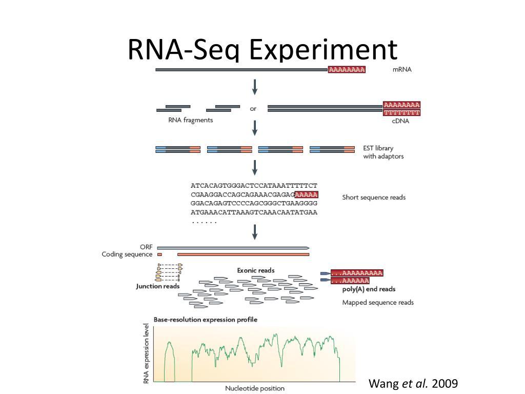 RNA-Seq Experiment