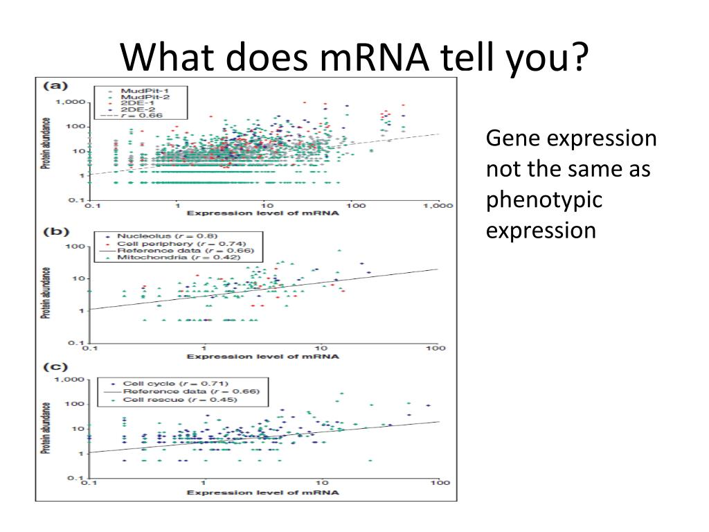 What does mRNA tell you?