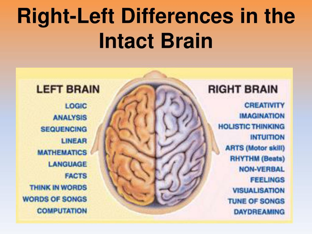 Right-Left Differences in the Intact Brain