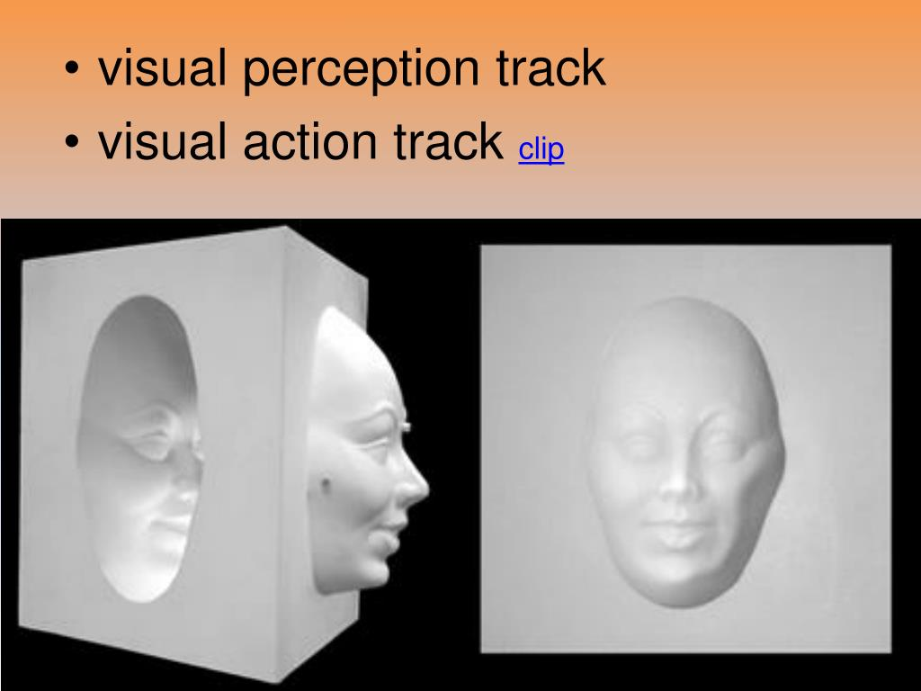 visual perception track