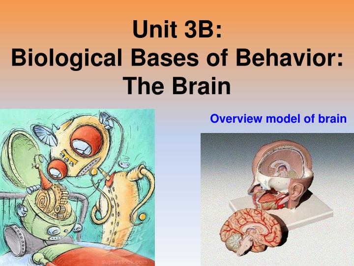 Unit 3b biological bases of behavior the brain