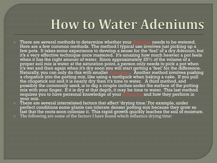 How to water adeniums2
