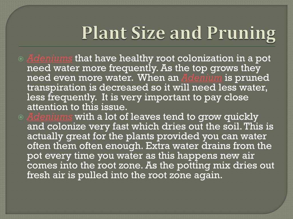 Plant Size and Pruning