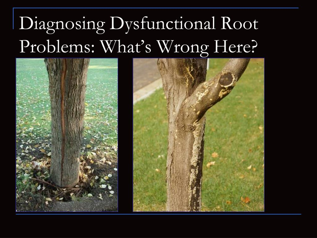 Diagnosing Dysfunctional Root Problems: What's Wrong Here?