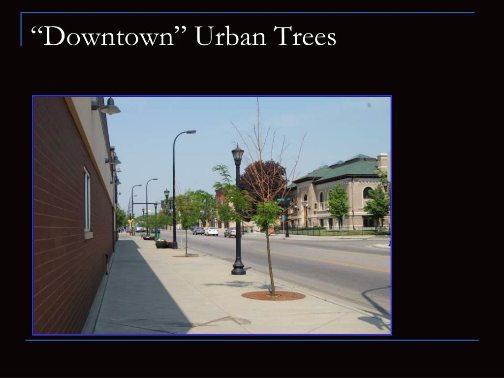"""Downtown"" Urban Trees"