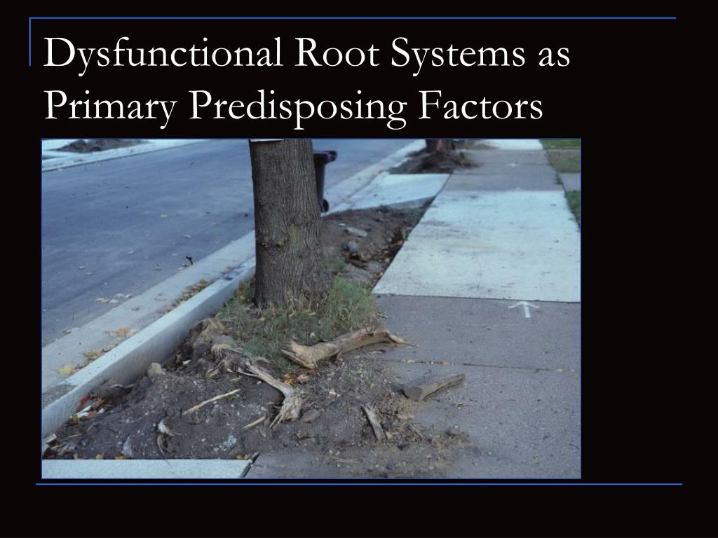 Dysfunctional Root Systems as Primary Predisposing Factors