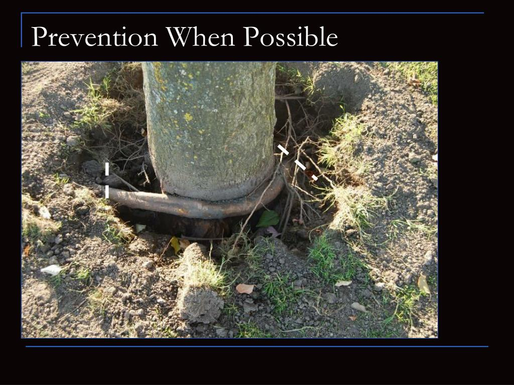 Prevention When Possible