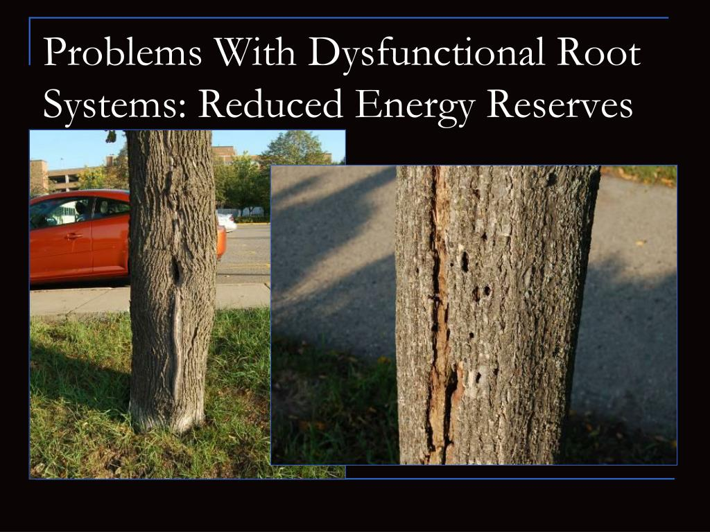 Problems With Dysfunctional Root Systems: Reduced Energy Reserves