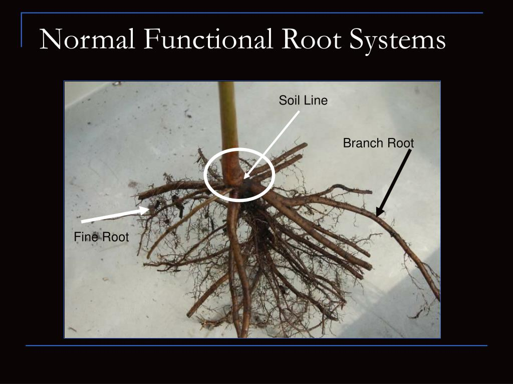 Normal Functional Root Systems