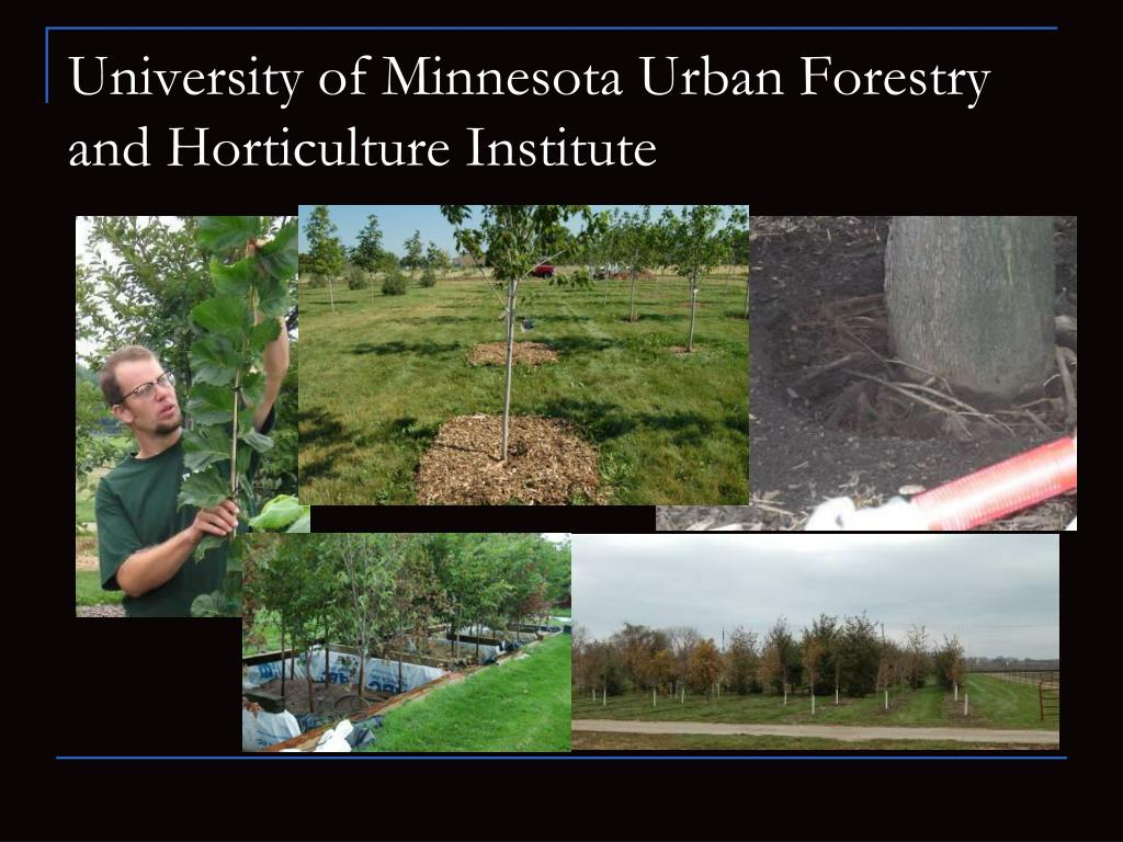 University of Minnesota Urban Forestry and Horticulture Institute