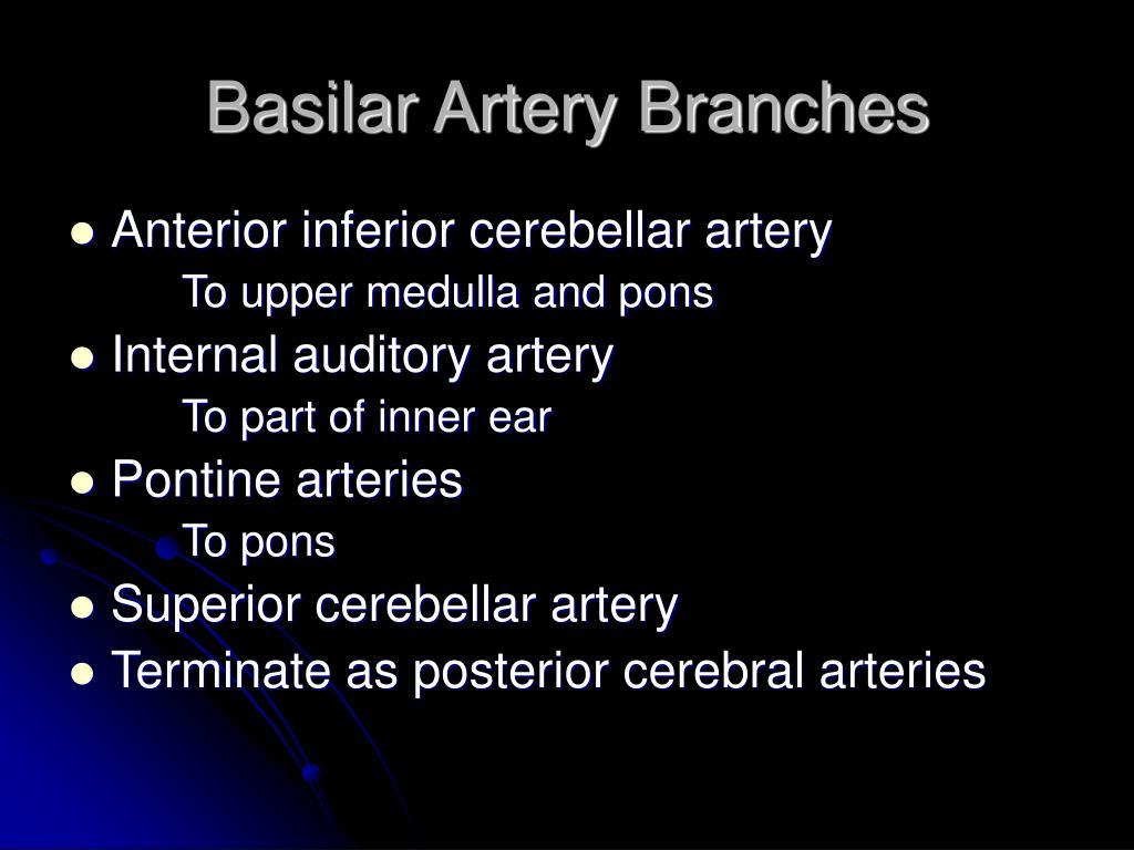 Basilar Artery Branches