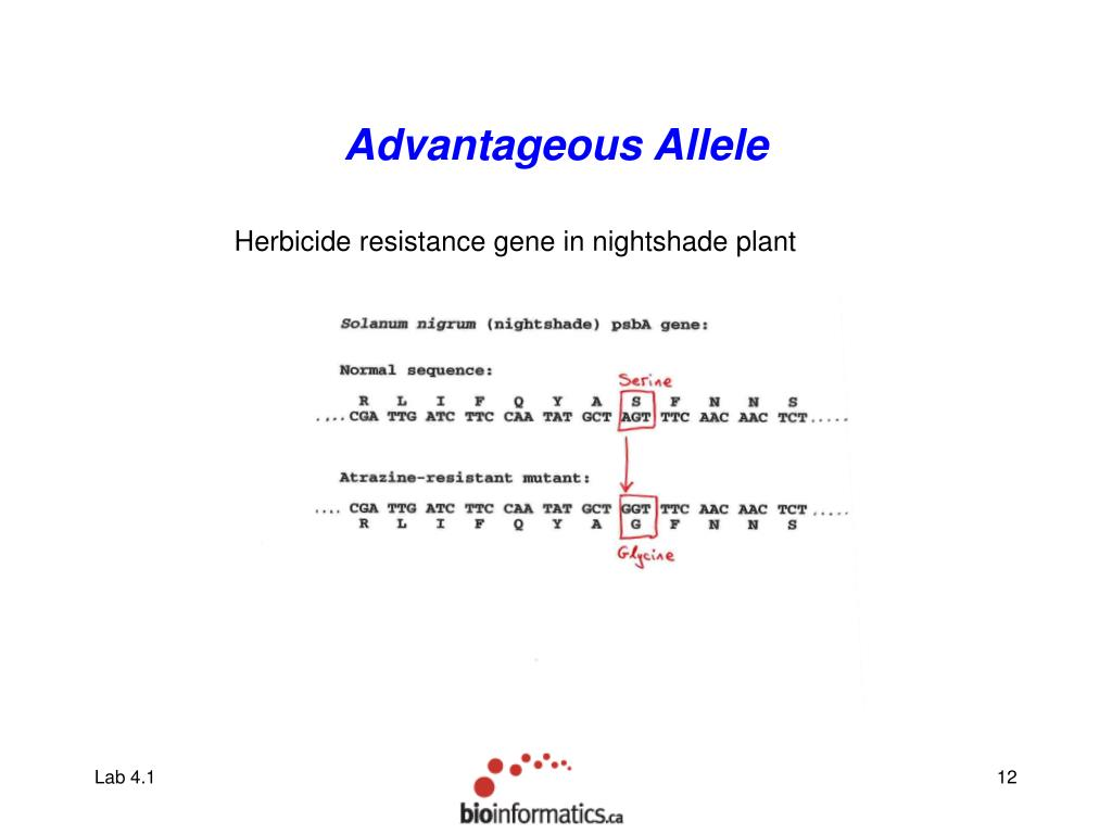 Advantageous Allele