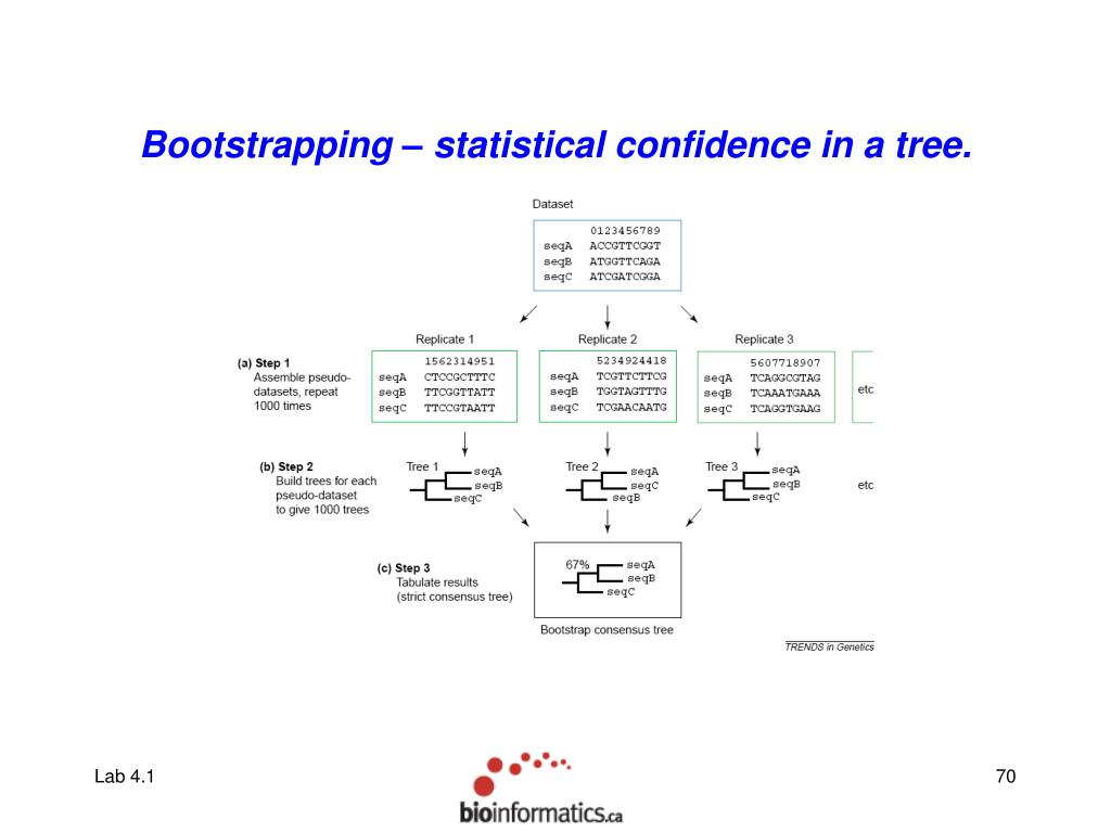 Bootstrapping – statistical confidence in a tree.