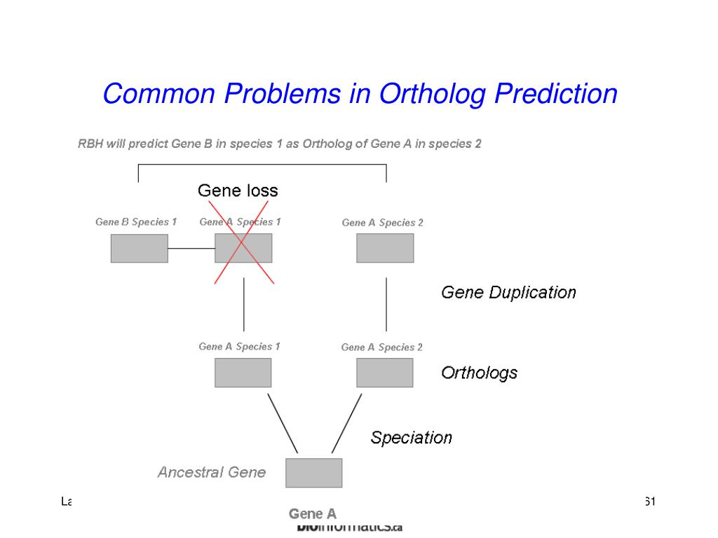 Common Problems in Ortholog Prediction