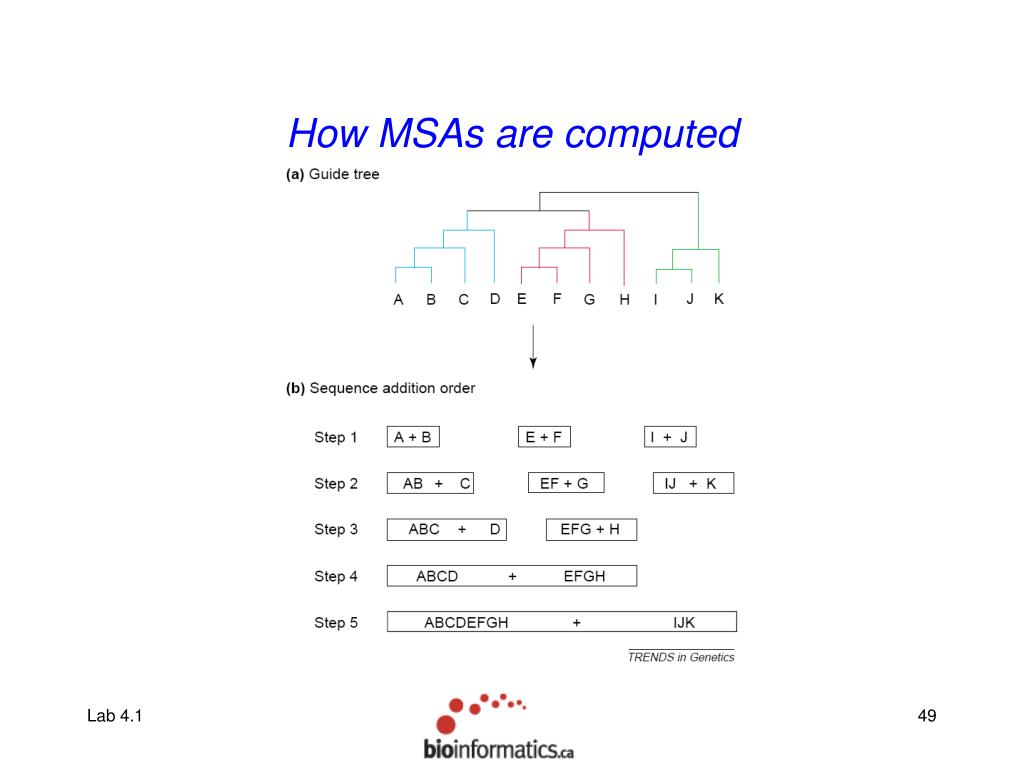 How MSAs are computed