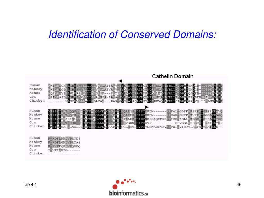 Identification of Conserved Domains: