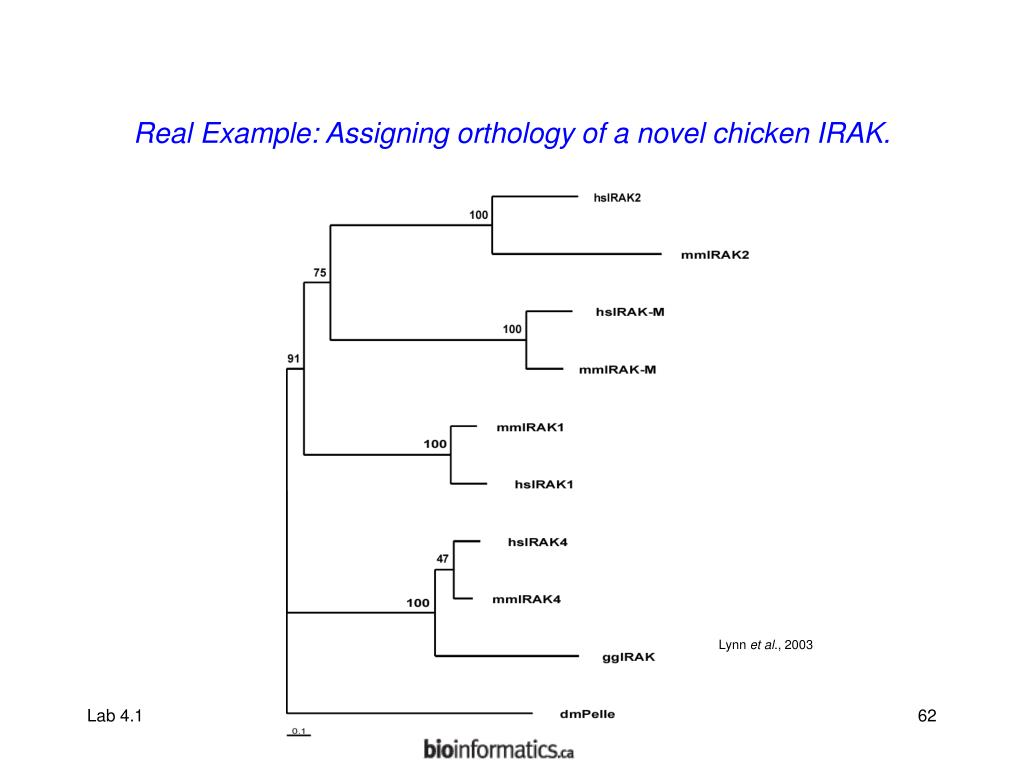 Real Example: Assigning orthology of a novel chicken IRAK.