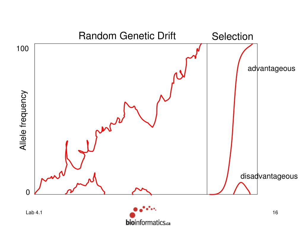 Random Genetic Drift
