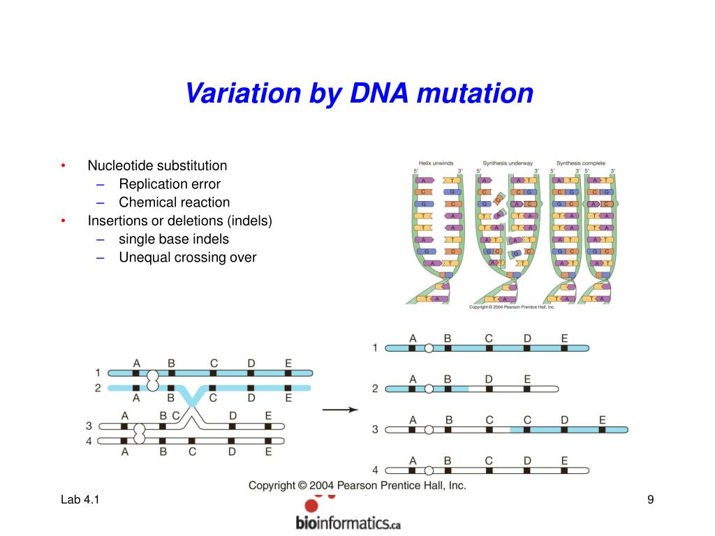 Variation by DNA mutation
