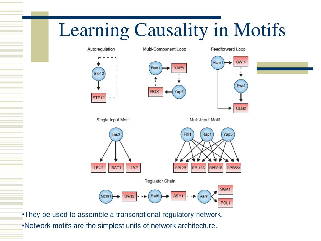 Learning Causality in Motifs