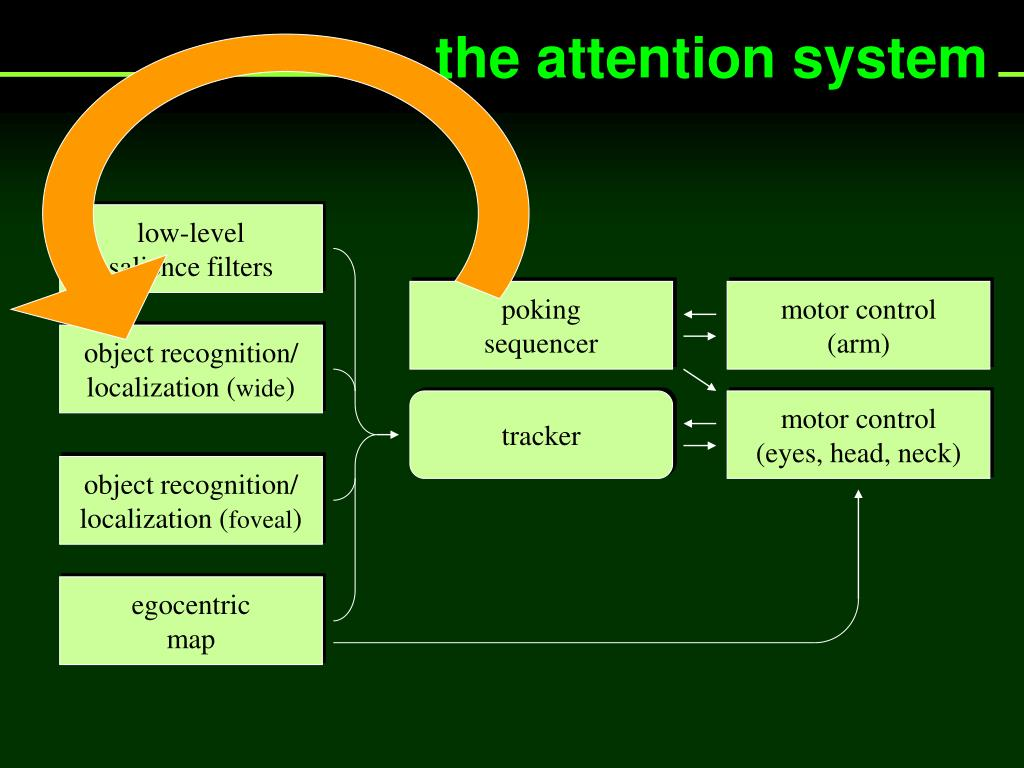 the attention system