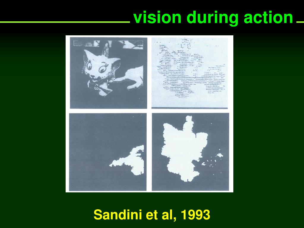 vision during action