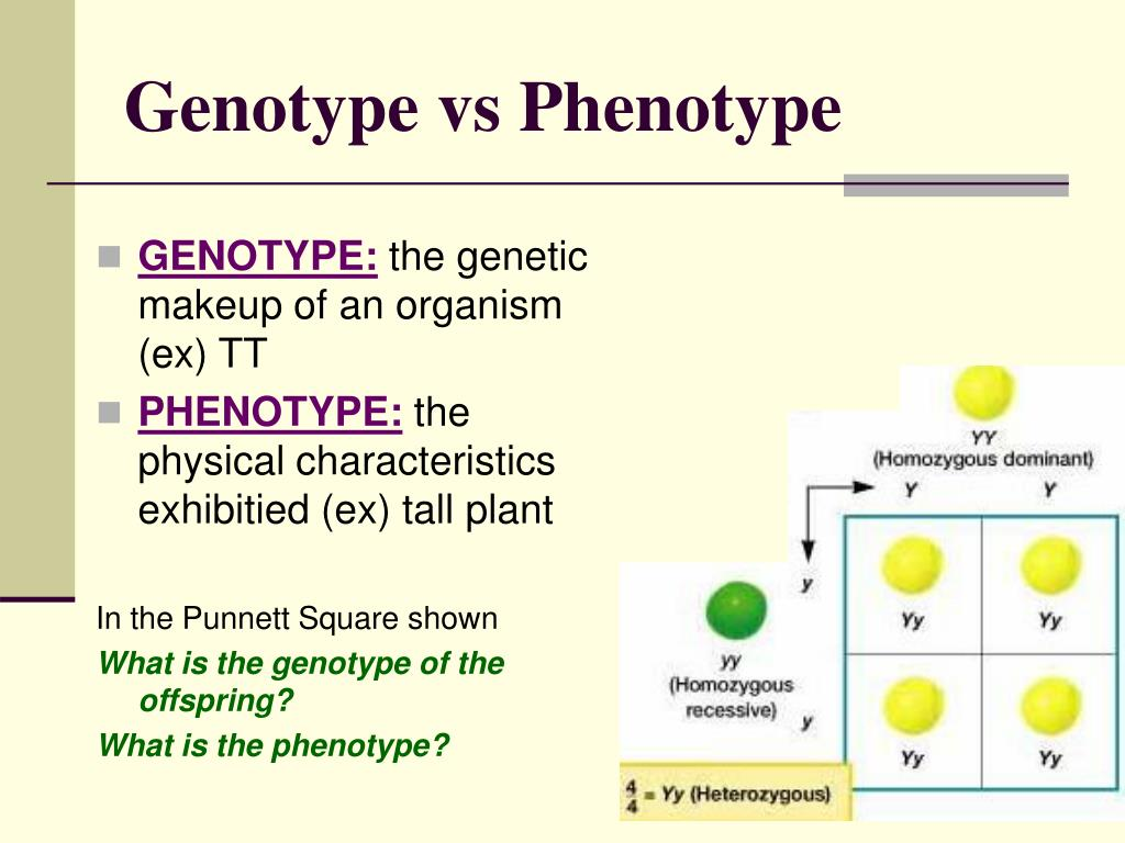 PPT - Chapter 11 Introduction to Genetics PowerPoint ...