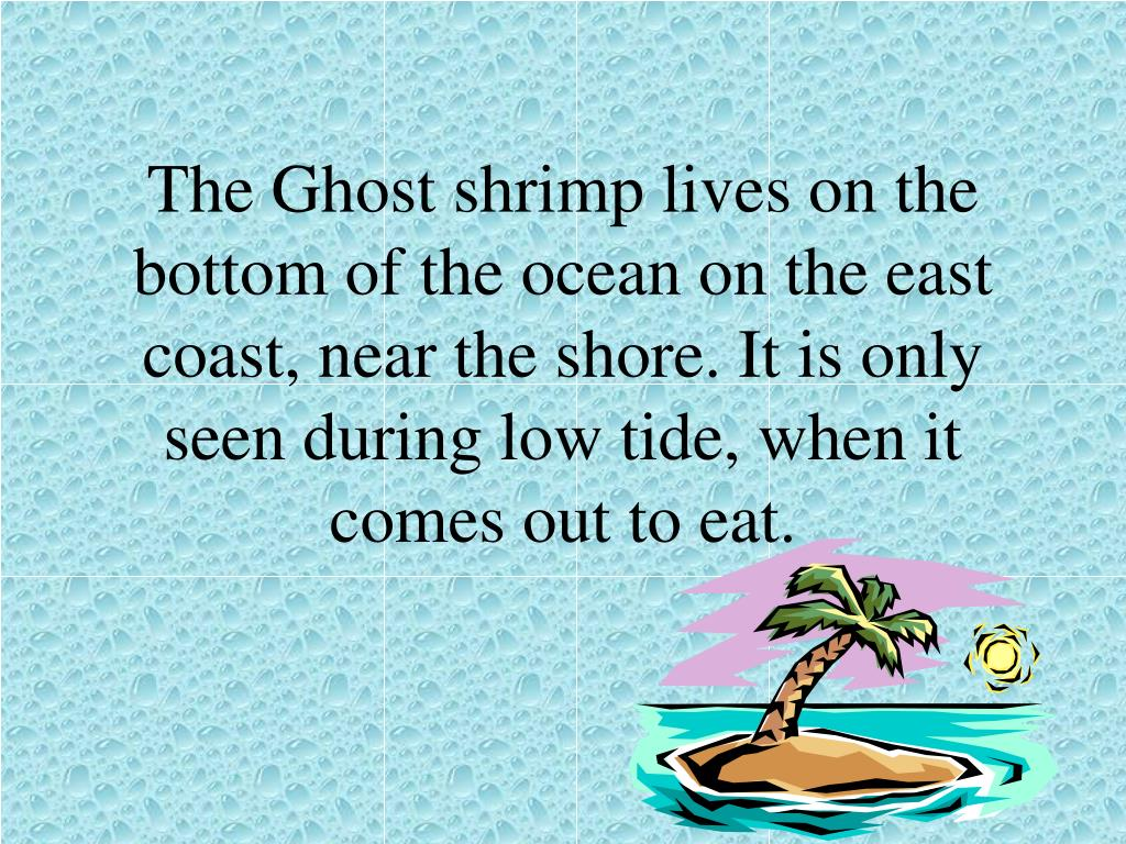 The Ghost shrimp lives on the bottom of the ocean on the east coast, near the shore. It is only seen during low tide, when it comes out to eat.