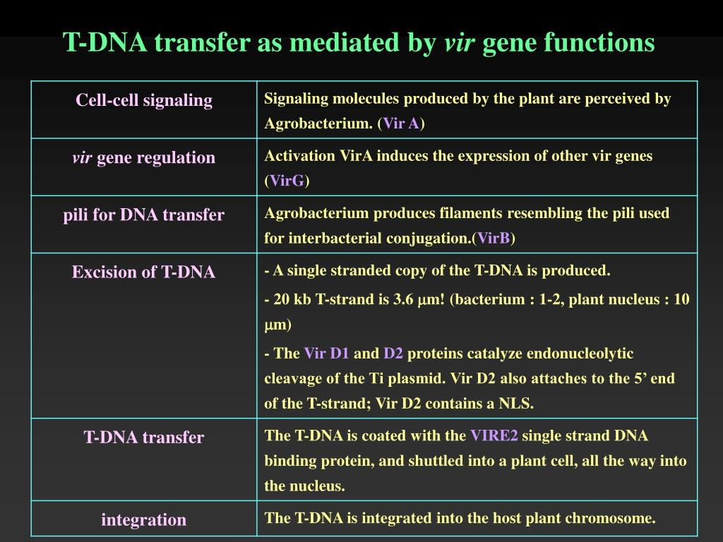 T-DNA transfer as mediated by