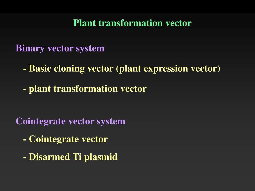 Plant transformation vector