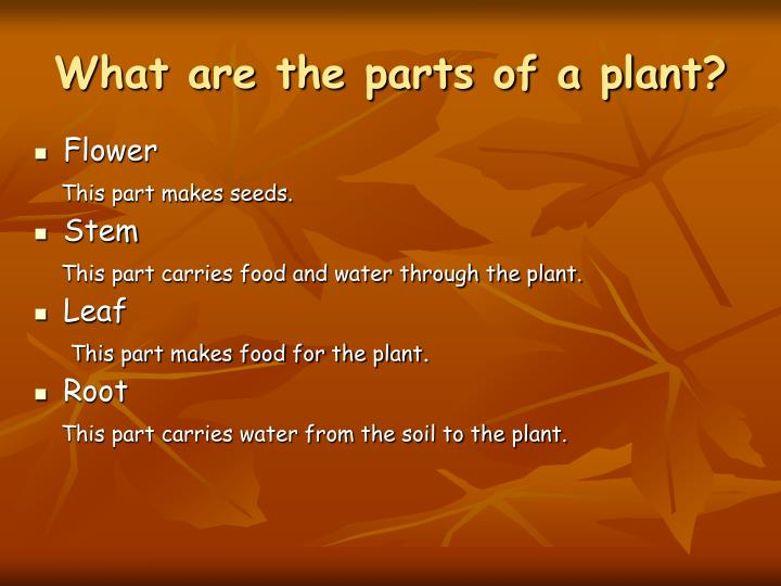 What are the parts of a plant l.jpg
