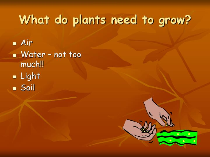 What do plants need to grow l.jpg