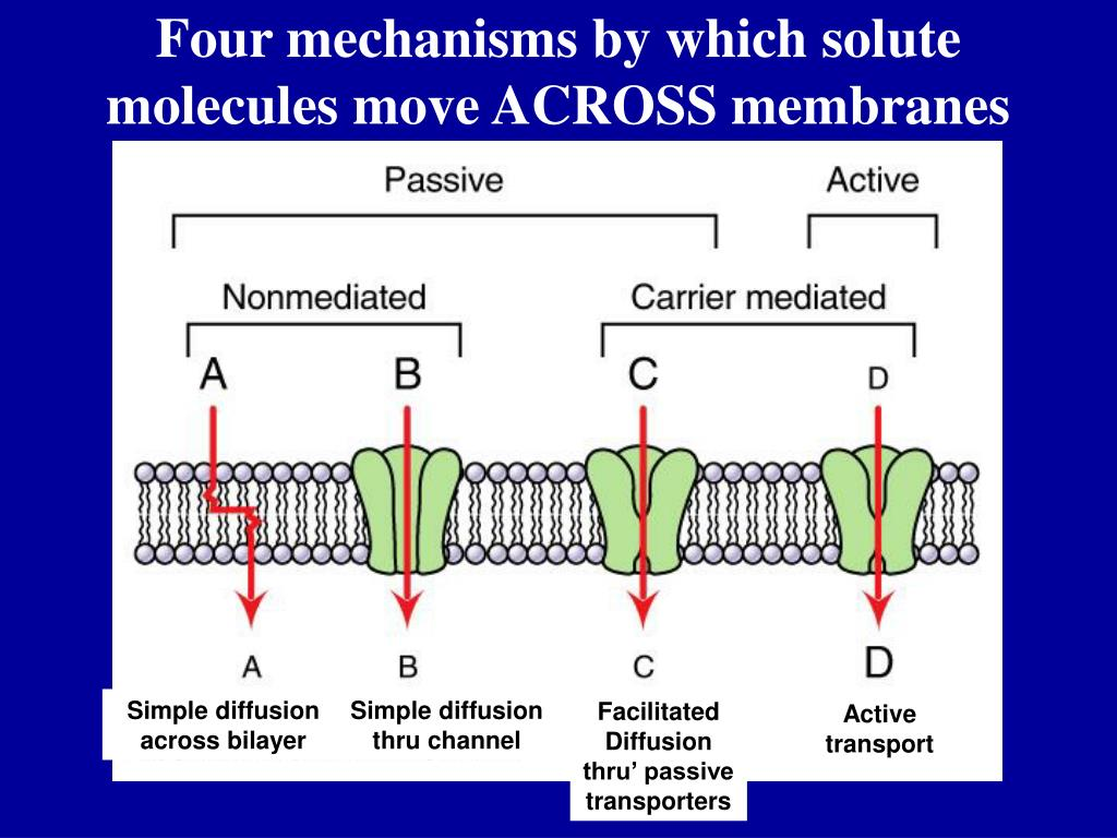 Four mechanisms by which solute molecules move ACROSS membranes
