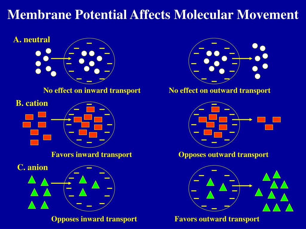 Membrane Potential Affects Molecular Movement