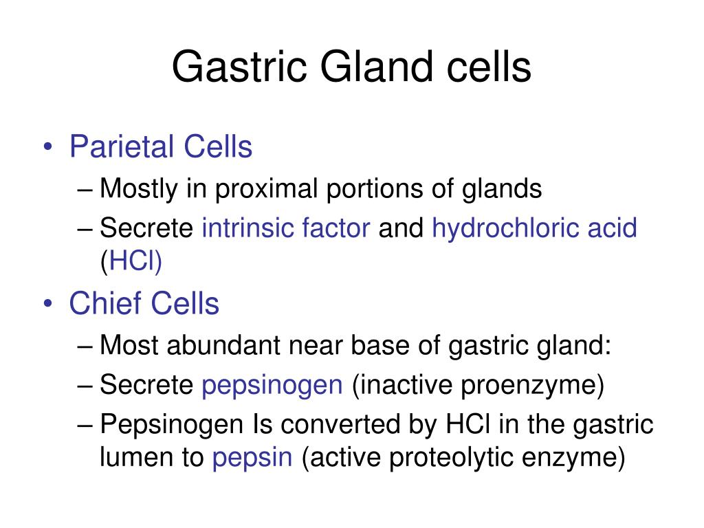 Gastric Gland cells