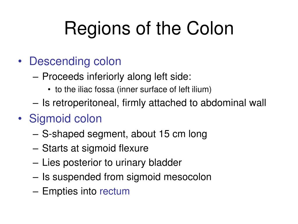 Regions of the Colon