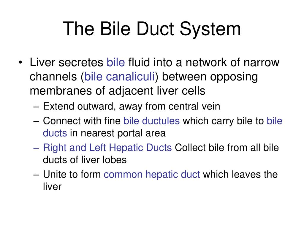The Bile Duct System