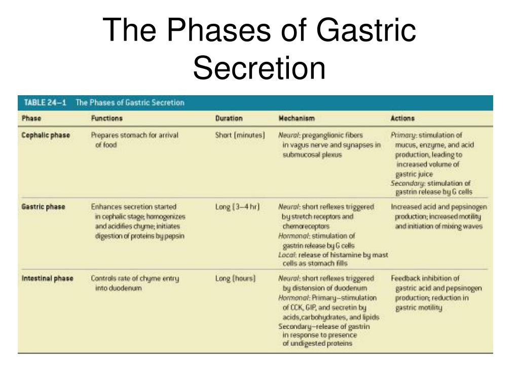 The Phases of Gastric Secretion