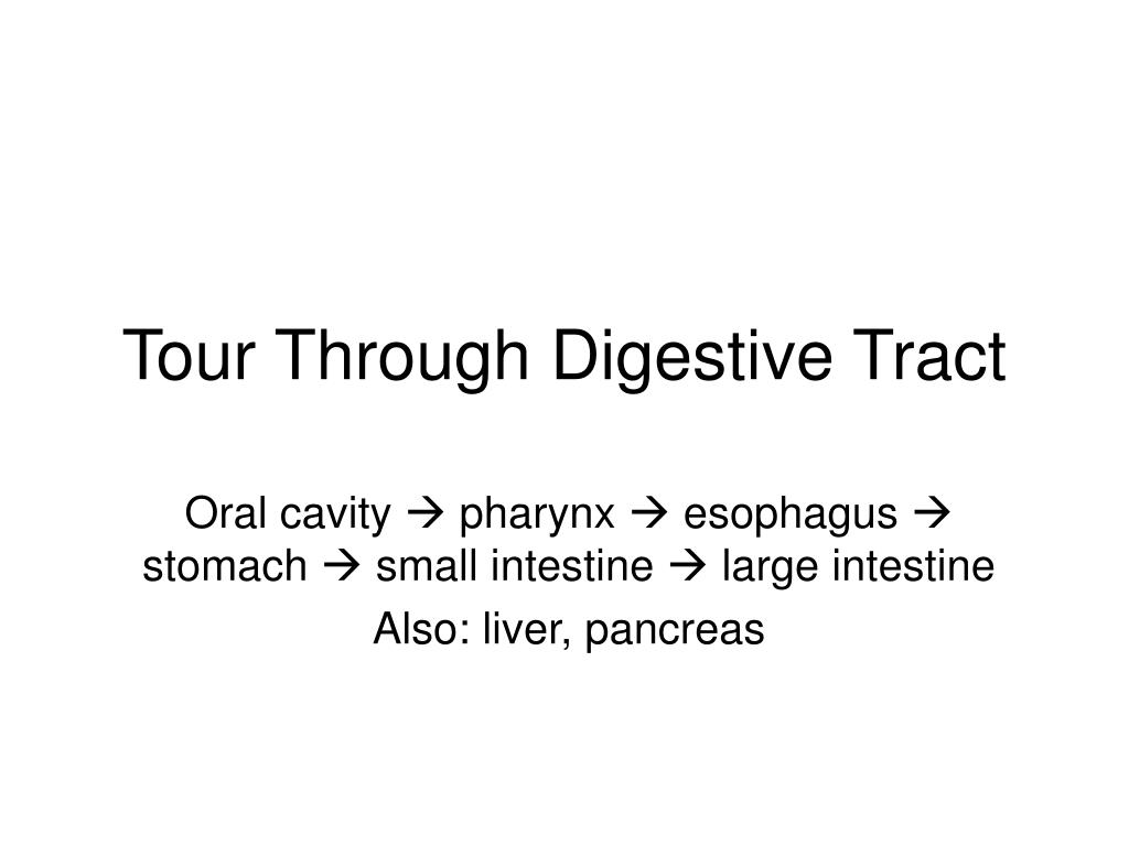 Tour Through Digestive Tract