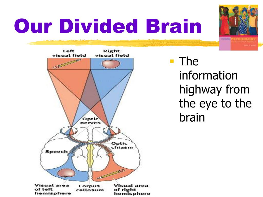 Our Divided Brain