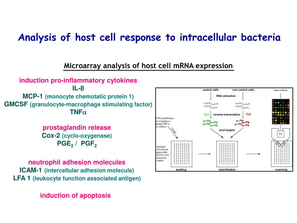 Microarray analysis of host cell mRNA expression