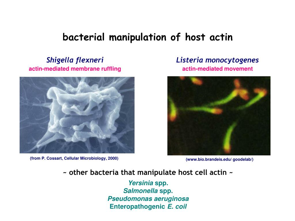 bacterial manipulation of host actin