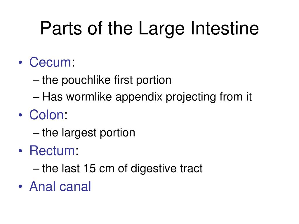Parts of the Large Intestine