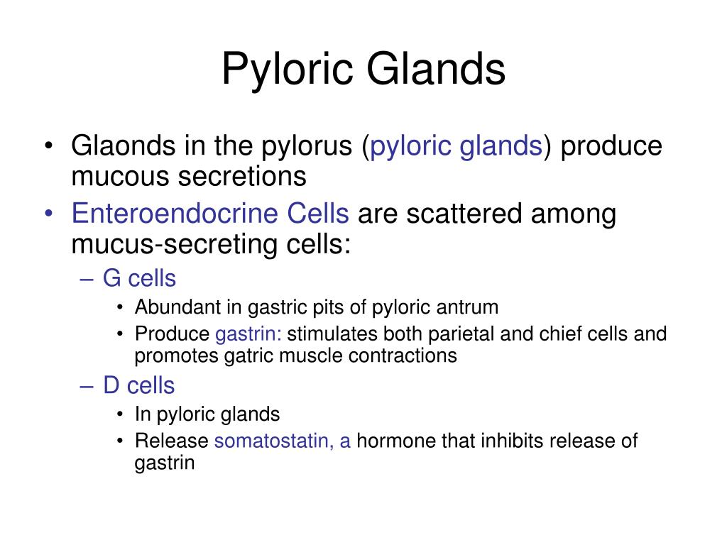 Pyloric Glands