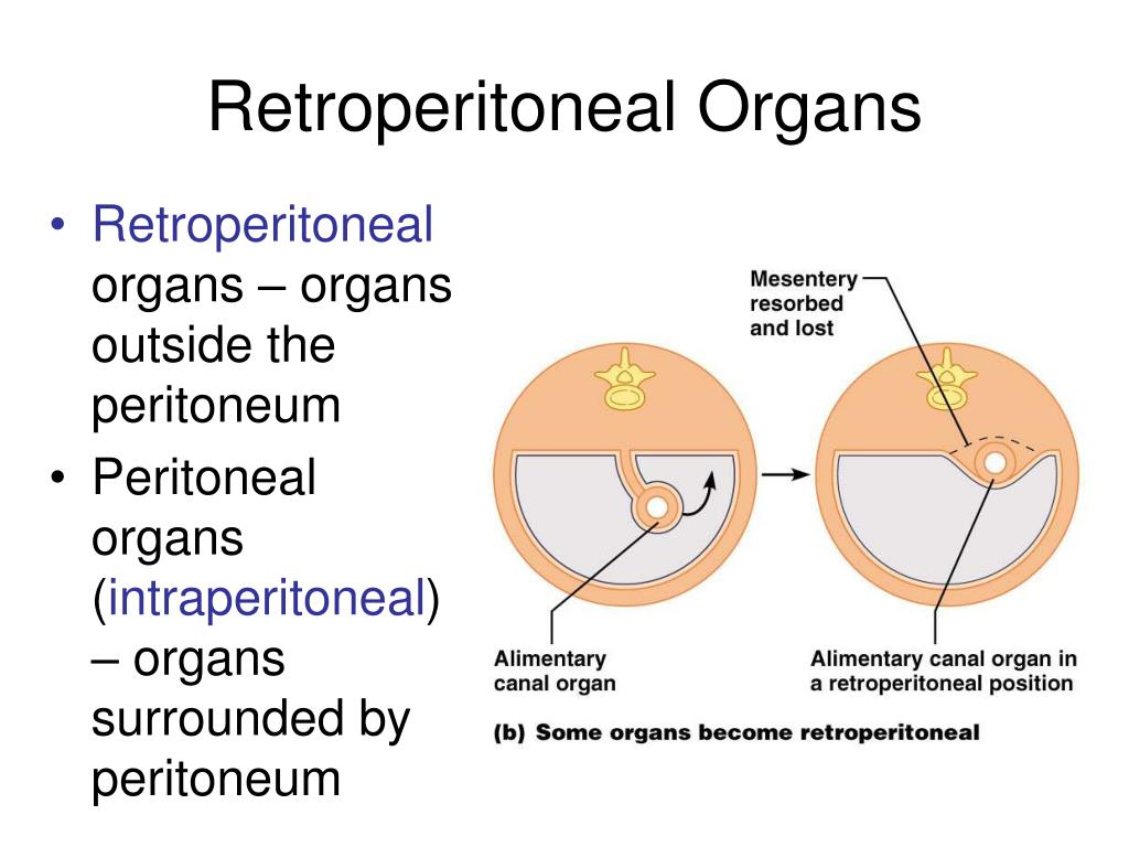 Retroperitoneal Organs