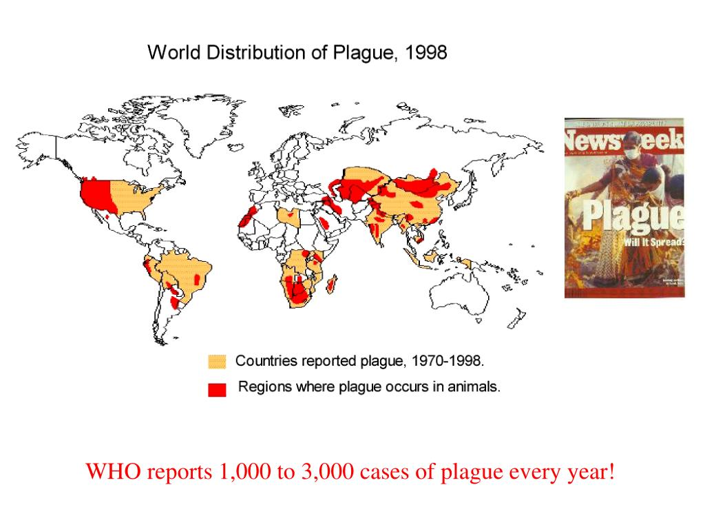 WHO reports 1,000 to 3,000 cases of plague every year!
