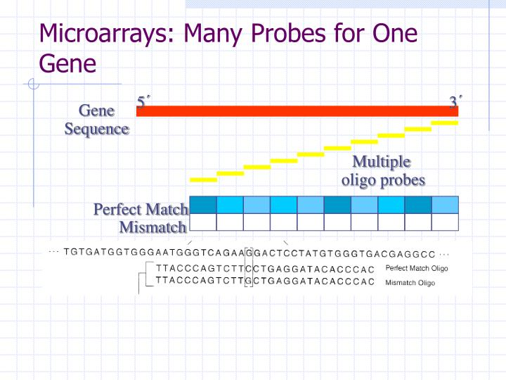 Microarrays many probes for one gene