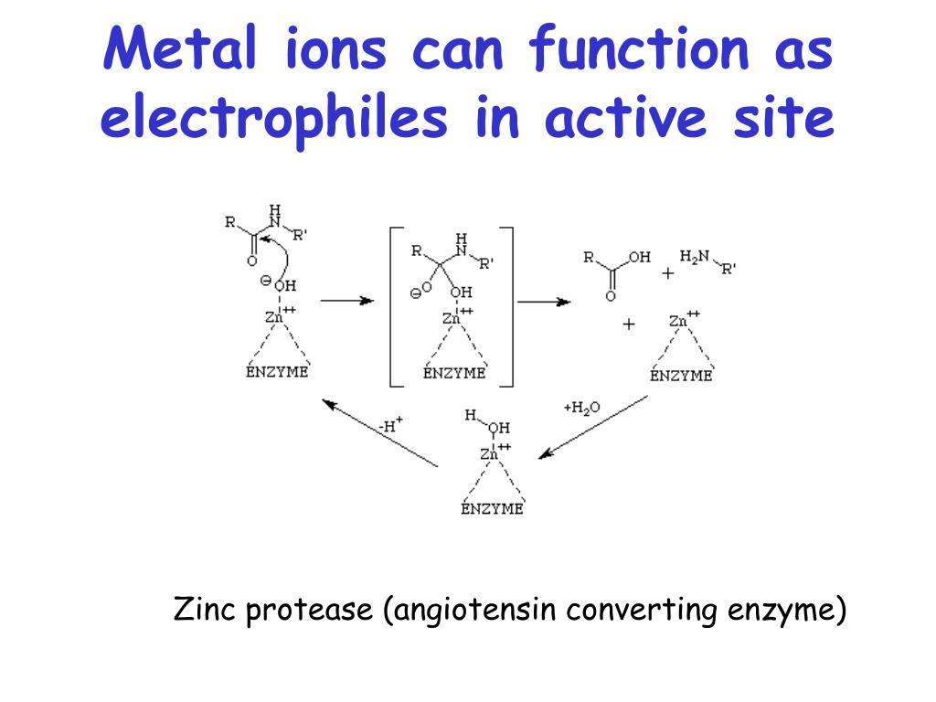 Metal ions can function as electrophiles in active site
